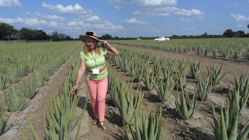 Maria Grotyńska na plantacji aloesu